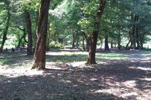 منطقه جنگلی خرما ( سیسکو) | خرما سیسکو کجاست؟