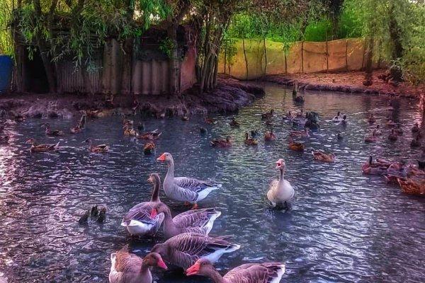 جاهای دیدنی خمام+تصاویر | روستای شیجان خمام در استان گیلان